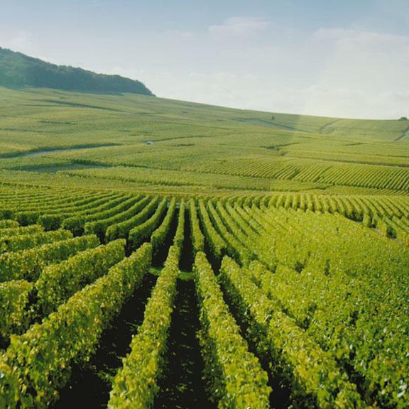 Moët & Chandon - Wine making & Savoir-faire - Film valorisation de savoir-faire - vidéo territoire vignoble vin, série documentaire, champagne